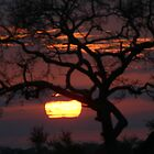 african sunsets,sunrises by jozi1