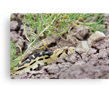 Great Basin Gopher Snake Canvas Print