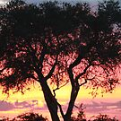 Autumn african sunset! by jozi1