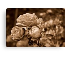 Faded Roses Canvas Print