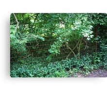 AN OLD WIRE FENCE Canvas Print