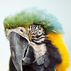 Ruffle My Feathers by Kristin Nichole Hamm