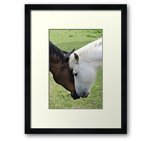 Equine love Framed Print