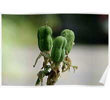 Bulbs ready to bloom Poster