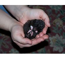 Hamster Dreams Photographic Print