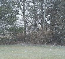 Snow Shower by lindsayasm