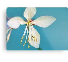Flower in Aqua Metal Print
