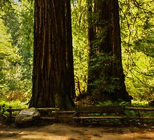Impressions of Muir Woods, California by Georgia Mizuleva