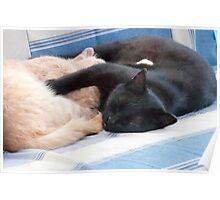 Snoozing Buddies...Real Swingers Poster