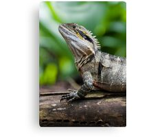 Eastern Water Dragon Canvas Print