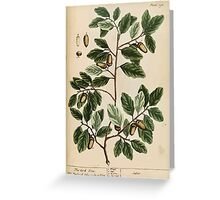 A curious herbal Elisabeth Blackwell John Norse Samuel Harding 1737 0494 The Cork Tree Greeting Card