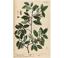 A curious herbal Elisabeth Blackwell John Norse Samuel Harding 1737 0494 The Cork Tree Photographic Print