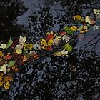 River Leaves by RVogler