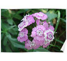 FLOWER BRACELET Poster