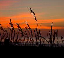 Blustery Beach by bcboscia410