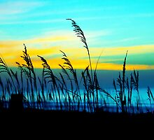 Blustery Beach (color edit) by bcboscia410
