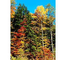 Fall On Brown Road Photographic Print