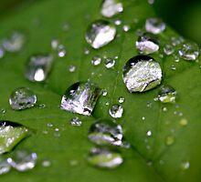 Spring Rain by AustraliaFund12