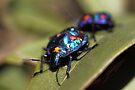 Pretty Blue Bugs by yolanda