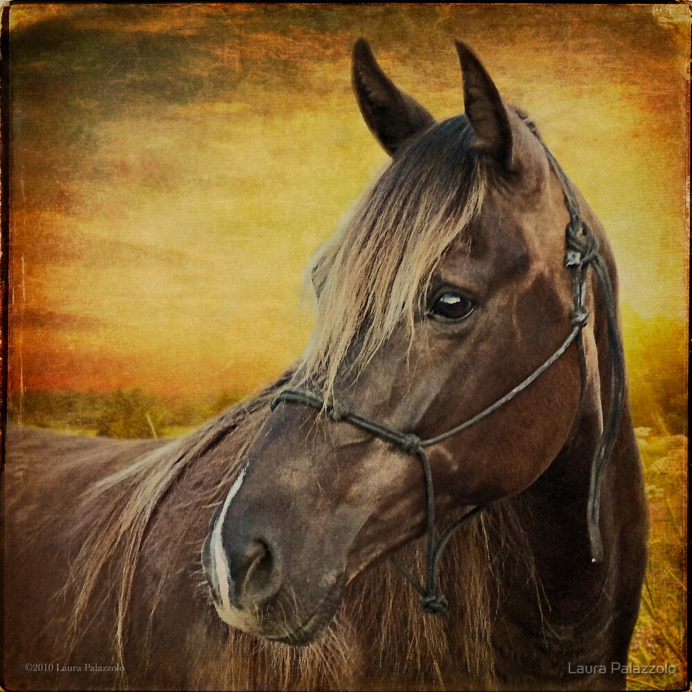 Portrait of a Rocky Mountain Horse by Laura Palazzolo