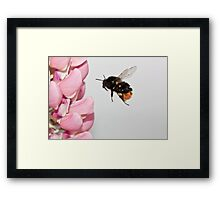 I fly through the air with the greatest of ease. Framed Print