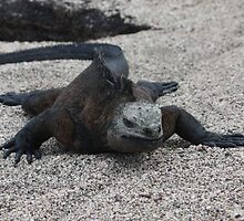 Marine Iguana snaking through the sand by littleBIG