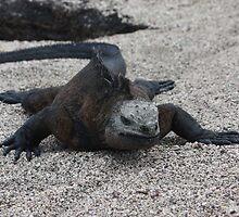 Marine Iguana snaking through the sand by littleBIG