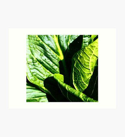 Skunk Cabbage Portrait Art Print
