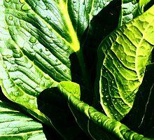 Skunk Cabbage Portrait by AlGrover