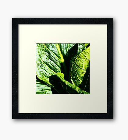 Skunk Cabbage Portrait Framed Print