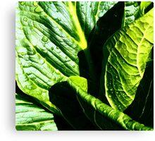 Skunk Cabbage Portrait Canvas Print