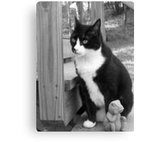 Fluffy and Friend Canvas Print