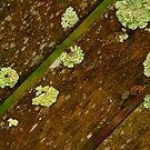 Lichen by Joe Mortelliti