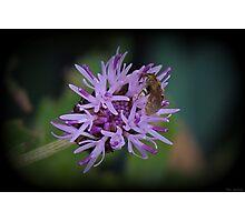 Microworld Photographic Print