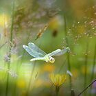 """ Dragonfly Magic "" by Richard Couchman"