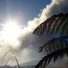 Fern Sky Cloud, Yang-ming National Park by Digby