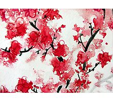 Cherry Blossoms III Photographic Print