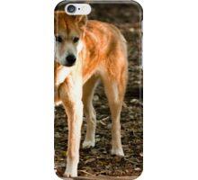Australian Dingo iPhone Case/Skin