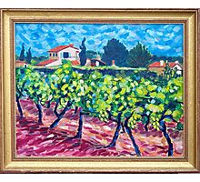 Vineyard in France Photographic Print