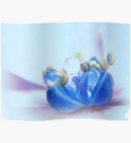 Hydrangea so blue... Poster