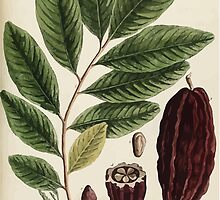A curious herbal Elisabeth Blackwell John Norse Samuel Harding 1739 0310 The Coco Nut tree by wetdryvac