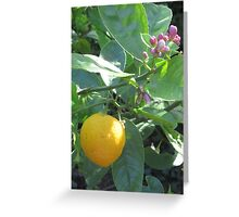 Lemon Tree Blossom Greeting Card