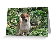 jack russell - on the hunt on the garden stream Greeting Card