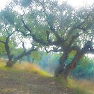 Olive trees. Zakintos. Greece. by Brown Sugar. Favorites: 10 Views: 2377 Thanks  friends !!! Featured in Avant~Garde Art . Thanks !  by AndGoszcz