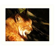 Sleeping Lynx  Art Print