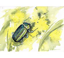 Green Scarab Beetle Photographic Print