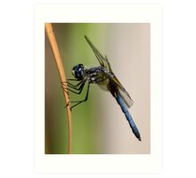 Profile of a Blue Dasher Art Print