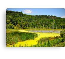 Near Lake Thunderbird @ Putnam, IL (Spring) Canvas Print