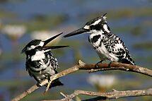 Bird talk! by jozi1