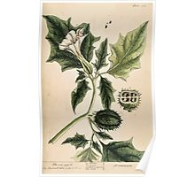 A curious herbal Elisabeth Blackwell John Norse Samuel Harding 1739 0160 Thorn Apple Poster